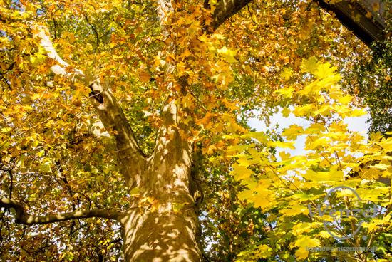 Herbst –  Foto Wenzel-Oschington.de