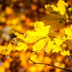 Fotos – Herbst im Magdeburger Umland