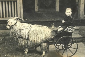 Vintage goat drawn carriage