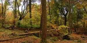 Slieve Gullion Woods