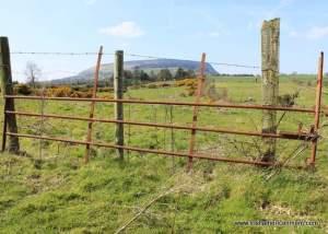 Looking at Knocknarea through a rusty iron gate