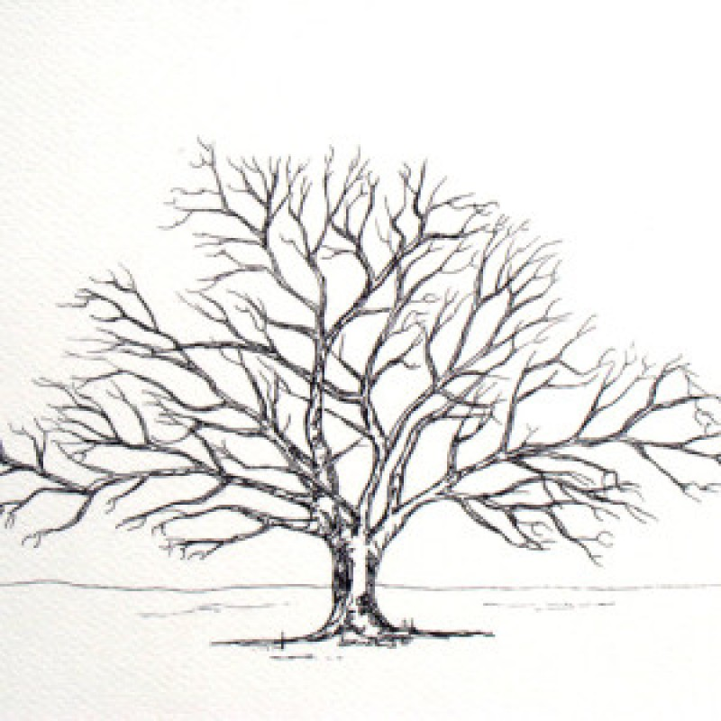 Friends  Family Tree- Takes 15 Fingerprints - Irish Oak- Small
