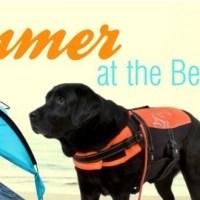 Baden mit Hund: Summer at the Beach