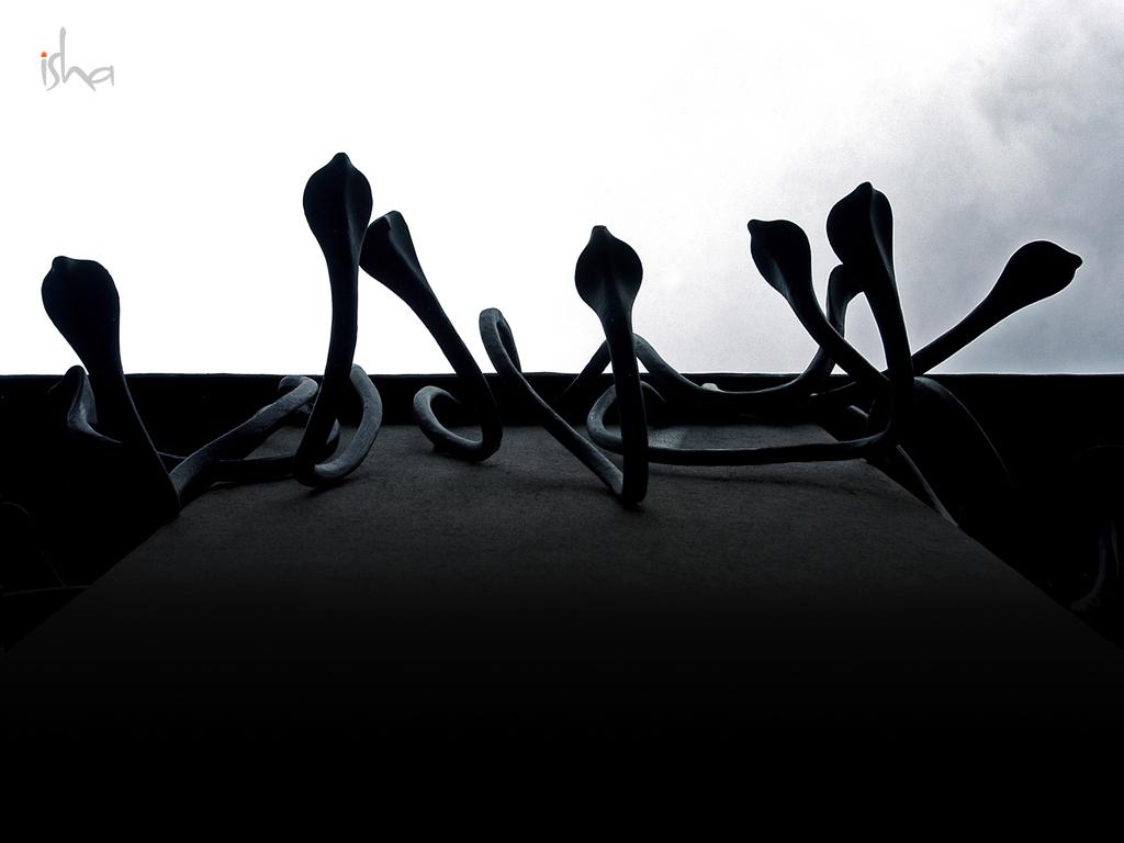 Forest Black And White Wallpaper Desktop Wallpapers Sadhguru Isha Foundation Isha Yoga