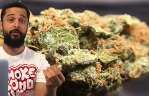 Bubble Gum Cannabis Strain