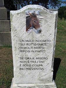 lapide mulo
