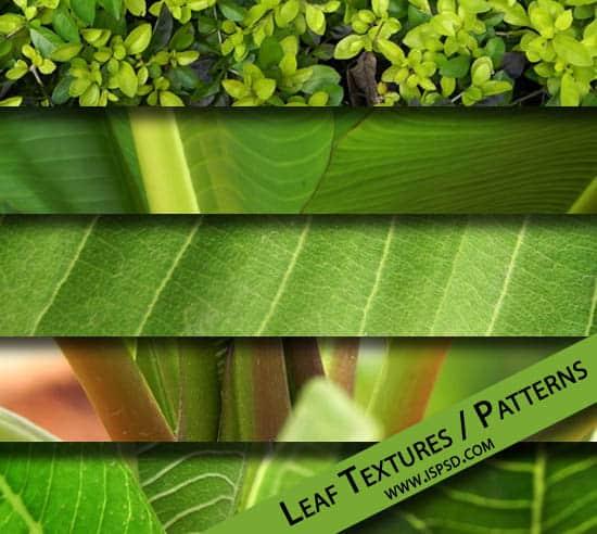 Green Leaf Textures