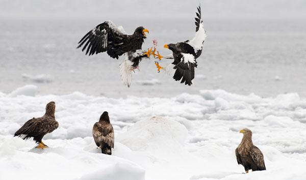 eagle Referees