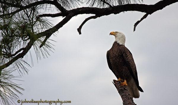 eagle front