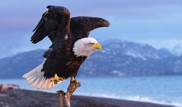 eagle stretch
