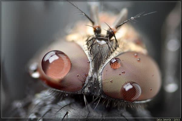 fleye drops