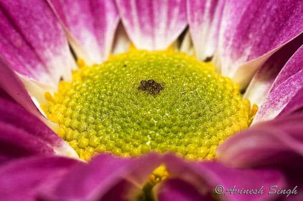 flower macro photography1