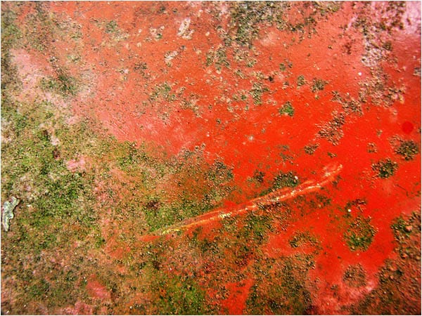 Red Rust Background
