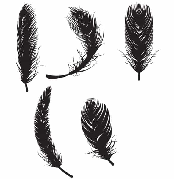 Silhouette Vector Bird Feathers