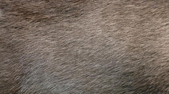 14-High-Resolution-Animal-Fur-Texture-Thumb04