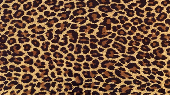 14-High-Resolution-Animal-Fur-Texture-Thumb08