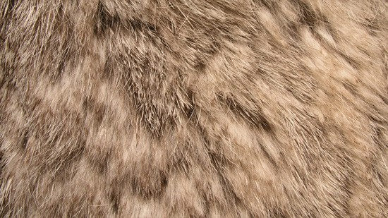 14-High-Resolution-Animal-Fur-Texture-Thumb11