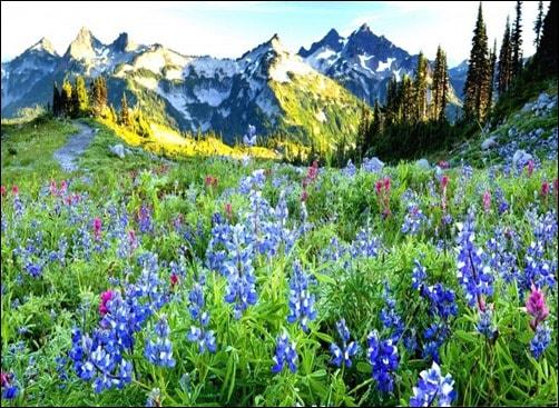 Beautiful-Spring-Landscape-spring-wallpaper[3]