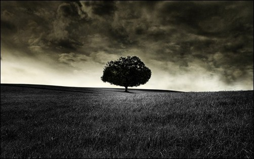 Black-Tree-Wallpaper-black-wallpaper