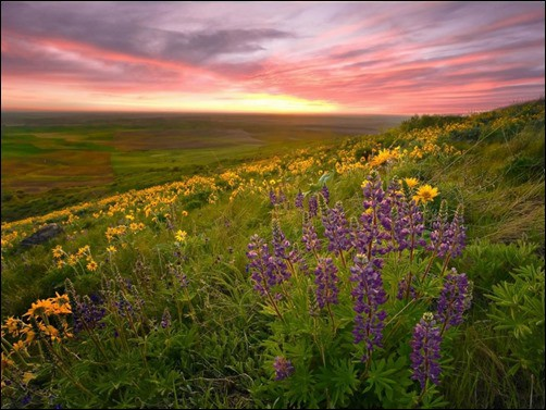 Fantastic-Spring-View-spring-wallpaper