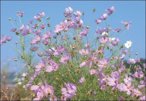 Spring-Flower-Wallpaper-spring-wallpaper