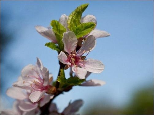 Spring-Flowers-spring-wallpaper