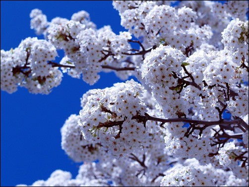 Spring-is-Here-spring-wallpaper