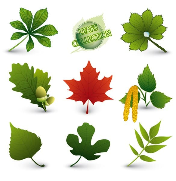 Fresh Green Leaves Foliage Vector Set