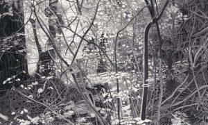 Muir-Woods-2013