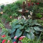 A Stroll In My June Flower Garden