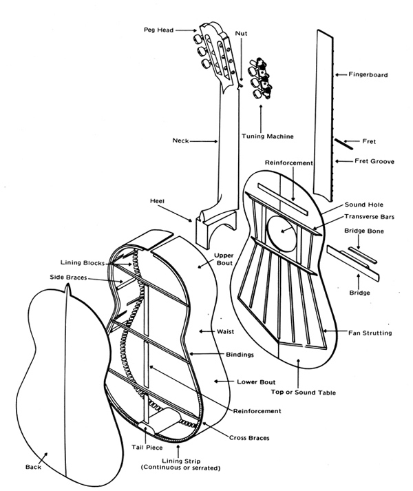 anatomy of the acoustic guitar diagram