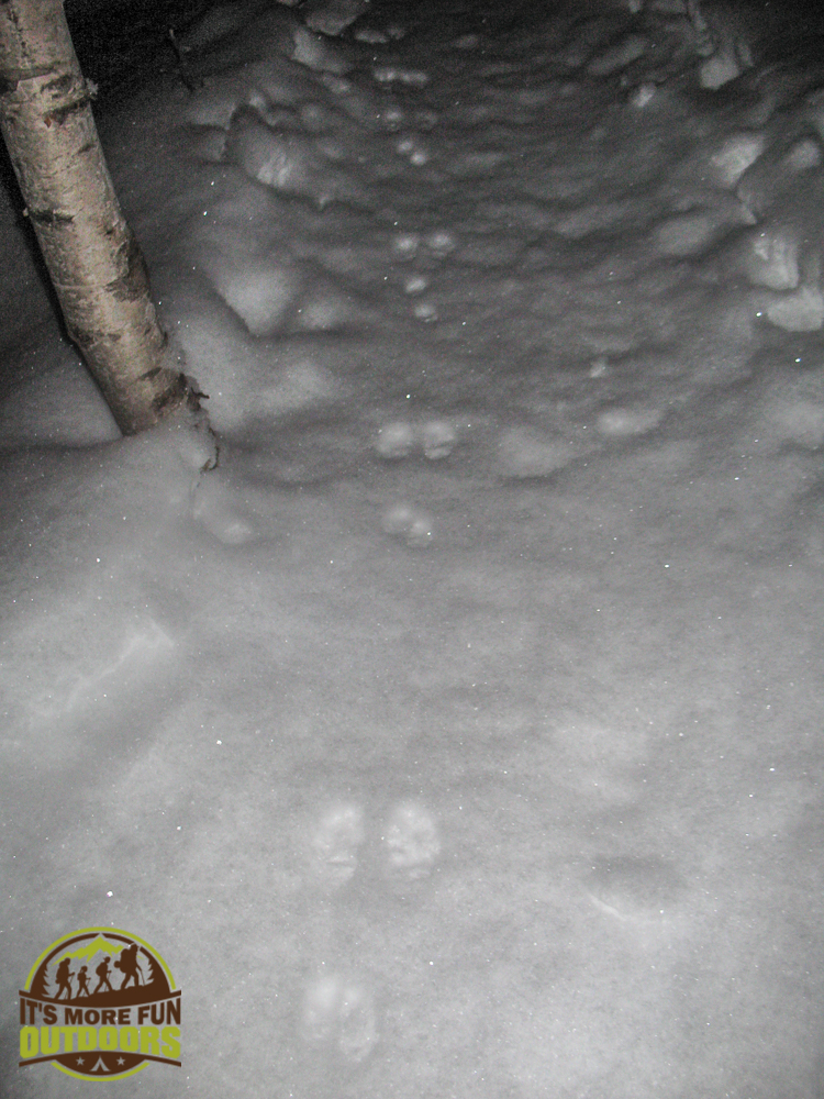 3.8.15: Pre dawn climb of Mt Jo! We followed tracks of a snow shoe hare all the way up!