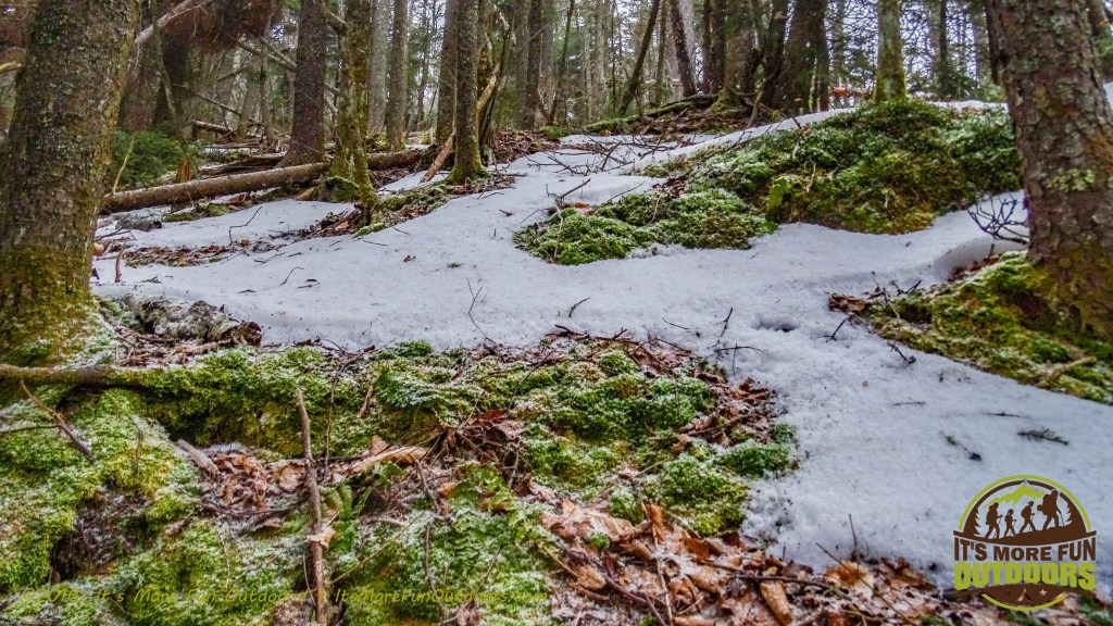 Pretty moss and a fresh dusting of snow! February 5, 2016 Black Mountain: My First SOLO Winter Fire Tower Challenge Hike!