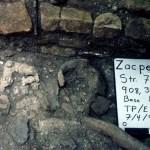 Zacpeten, Structure 764, In Situ Censer Sherds