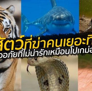 สัตว์อะไรฆ่าคนตายเยอะสุด? สิ่งมีชีวิตพันธุ์ไหนอันตรายที่สุดในโลก ลองทายก่อนดู