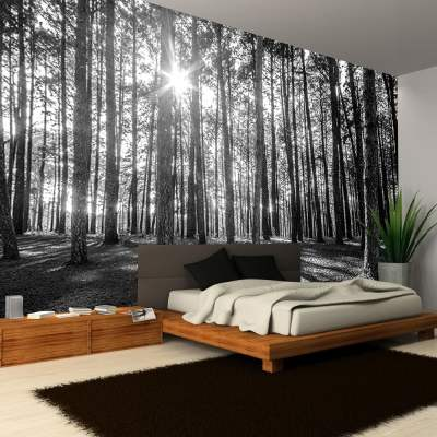 Rainbow Black & White Woodland Forest Mural Photo Giant Wall Decor R223 - Black White | I Want ...