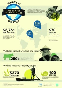 Download an infographic of wetland agriculture facts and figures