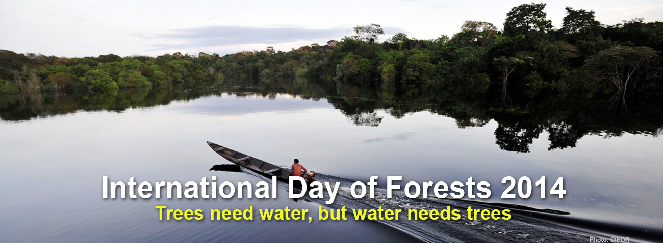 International Forests Day 2014