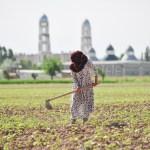 Are more women farmers a good thing in Tajikistan?