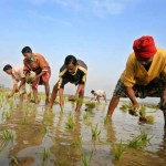 Bangladesh can avert a groundwater crisis by not producing too much rice