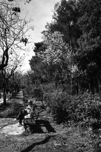 Κάτω από την Ανθισμένη Αμυγδαλιά | Under the Bloomed Almond Tree