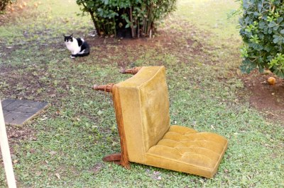 Chair and Cat