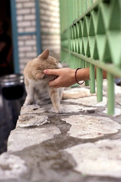 Stroking a Cat