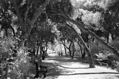 Walkway in the Grove
