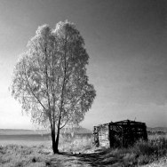 Tree and Hut