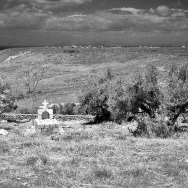 A Grave in an Olive Field