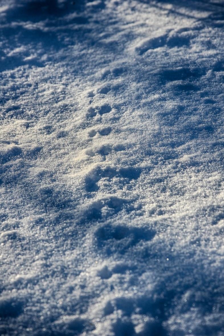 Tiny critter tracks
