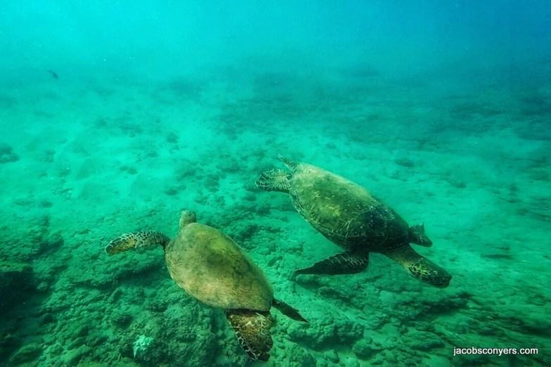 Turtle meeting