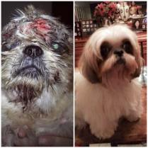Before and after of little Moka. As you know, We have thousands of stories at JAAN and thankfully thousands of happy endings to share! Thank you Ibu Linda for taking good care of Moka and for giving her the life she deserves! Same dog, different owner!
