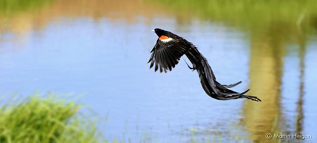 Słowa kluczowe typu long tail długi ogon
